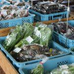 ローフードとは?野菜の栄養や酵素を効果的に取り入れる方法