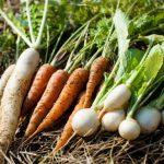 旬の野菜とは?健康な体になれる旬の野菜を食べるメリット
