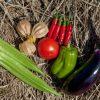 一番おすすめの野菜宅配サービスはどれ?