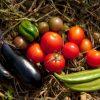 歩くのがツラくなったら…家まで届けてくれるおすすめの野菜宅配サービス